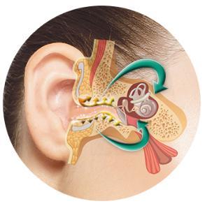 el oído, el oído